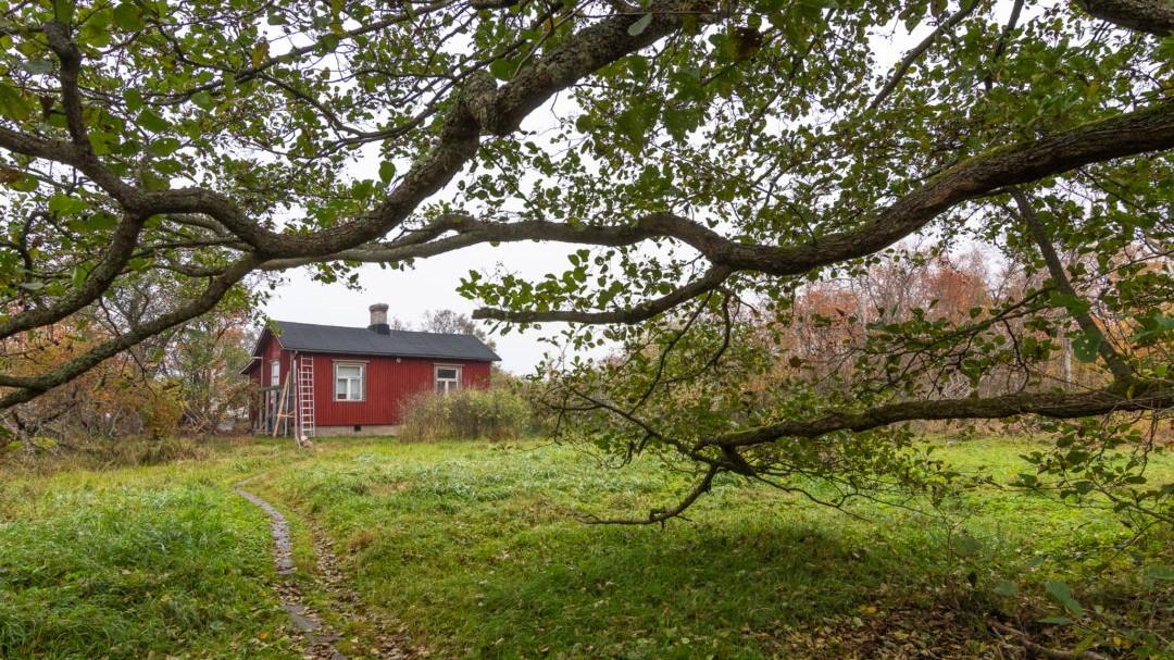 Hangon lintuasema. Pieni mökki keskellä omenapuutarhaa.